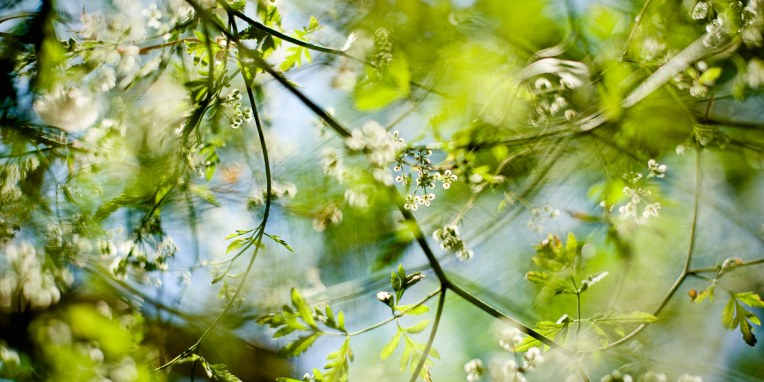 ambient_light_spain_spring_flowers_07