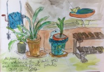 Plants on the terrace, a day waiting for friends