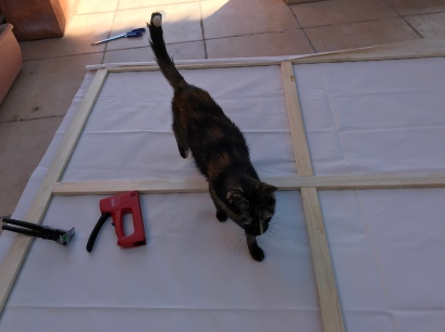 The cat very interested in preparation work, not always helpful